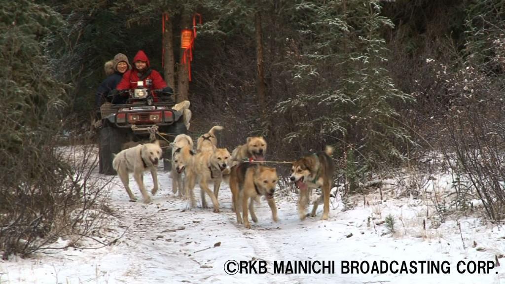 カナダ ホワイトホース 犬バギーでのトレーニング中の本多さん