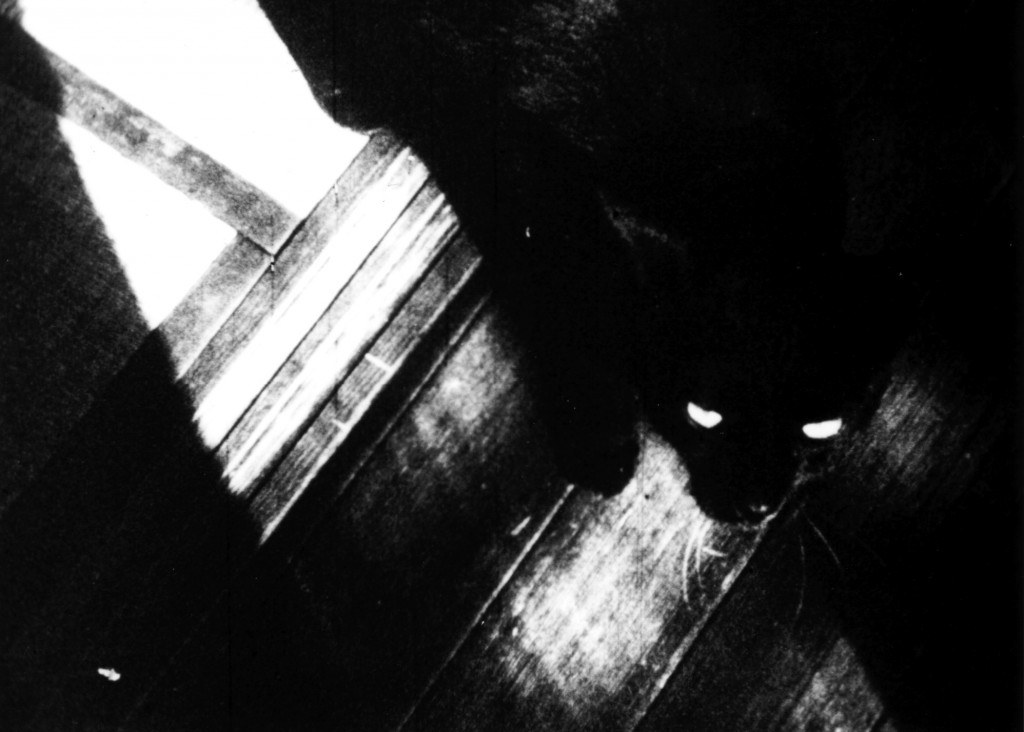 『猫と少年』©タゲレオ出版